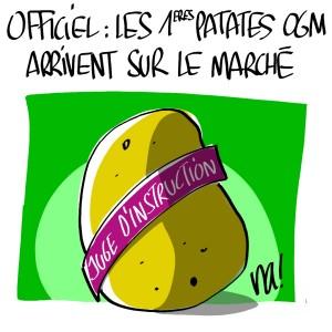 Nactualités : les premières patates OGM bientôt sur le marché
