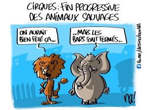 Cirques, fin progressive des animaux sauvages